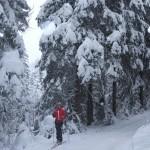 erster Lauf im Schneetreiben ...